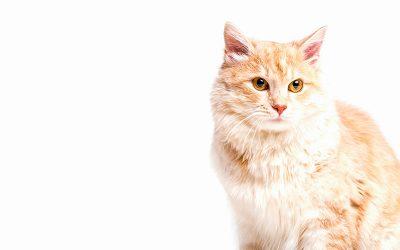 Consejos para cuidar mejor de tu gato cuando llega el calor