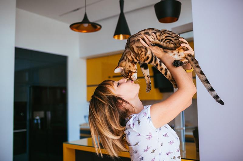 Cinco razas de gatos cariñosos