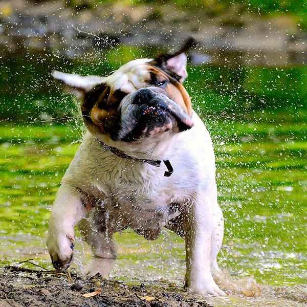 Cómo ayudar a tu perro a soportar el calor en verano