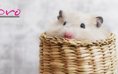 Hámsters: cuidados básicos para tu pequeño roedor