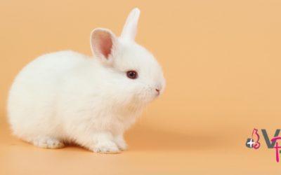 Conejos: cuidados básicos para mantenerlo sano y feliz