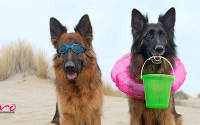 Consejos para pasar un día con tu perro en la playa