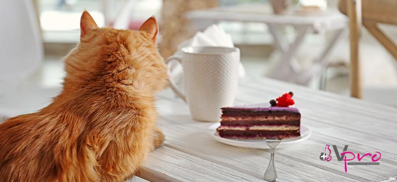 Cómo prevenir y eliminar el sobrepeso en gatos